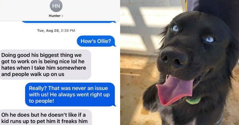 dog trainer scam, dog dies in trainer's care