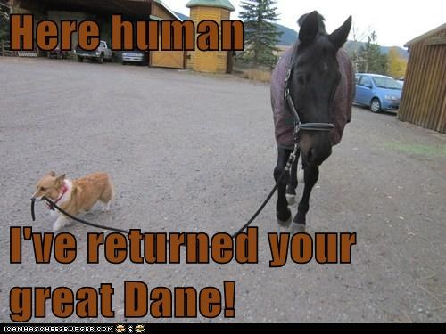 corgi,great dane,funny,horse