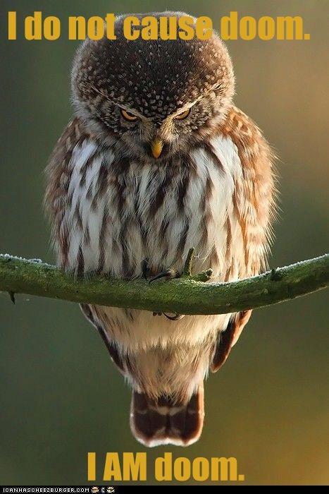 doom funny owls - 7502813184