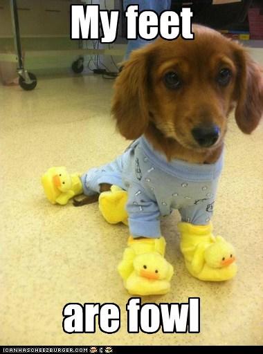fowl ducks slippers funny - 7503078400