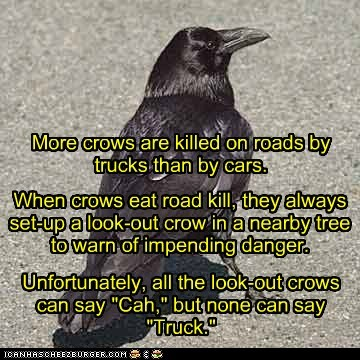 "More crows are killed on roads by trucks than by cars. When crows eat road kill, they always set-up a look-out crow in a nearby tree to warn of impending danger. Unfortunately, all the look-out crows can say ""Cah,"" but none can say ""Truck."""