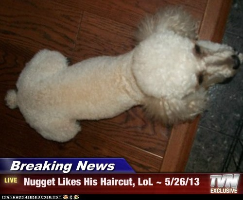 Breaking News -  Nugget Likes His Haircut, LoL ~ 5/26/13