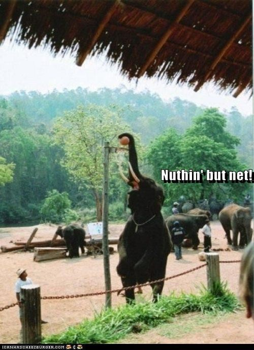 Meme of an elephant holding a basketball up with his trunk ready to slam dunk.