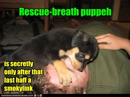 puppy cpr funny - 7505980160