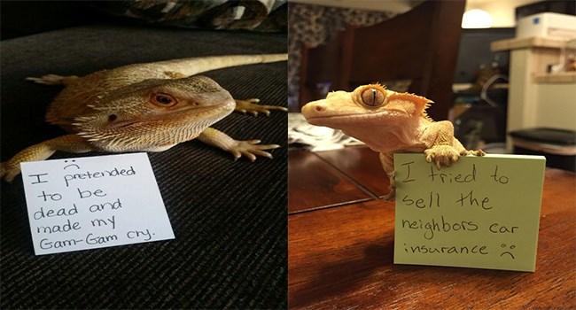 dragon lizards reptiles shaming funny - 7506181