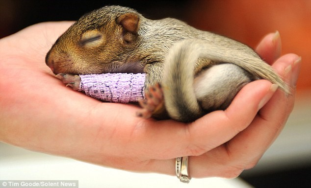 baby wounded squirrel - 7507461