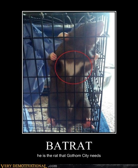 BATRAT he is the rat that Gothom City needs