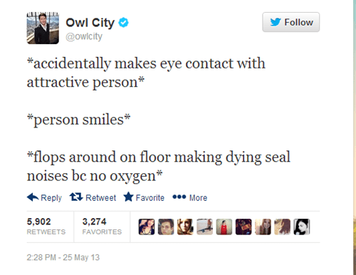 socially awkward penguin,owl city,Music,twitter,funny,g rated