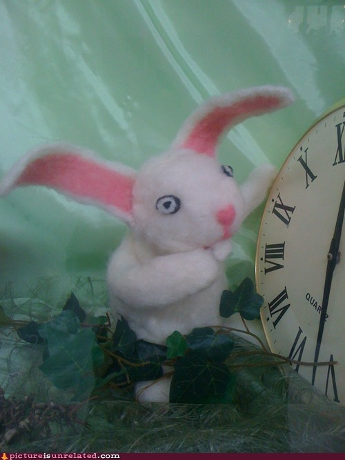 alice in wonderland,wtf,rabbit,funny