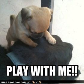puppy cute play - 7508049152