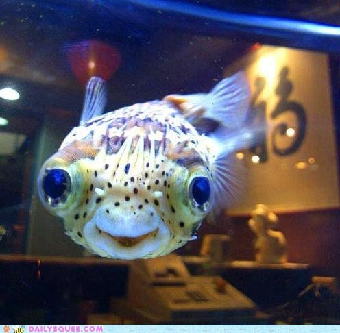 fish,oh hai,smile
