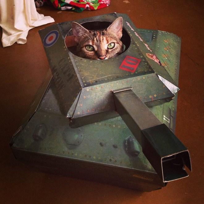 tanks cat photos army Cats - 7508741