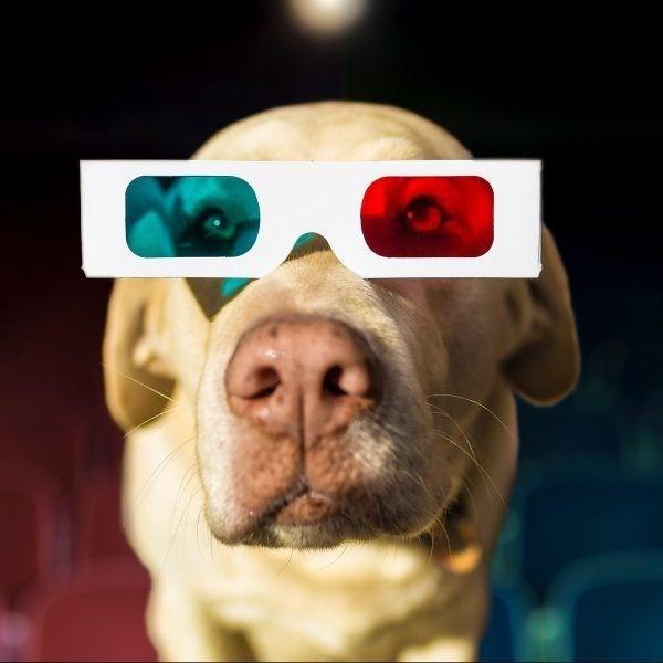 dogs texas cinema - 7508997