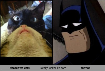 these two cats Totally Looks Like batman