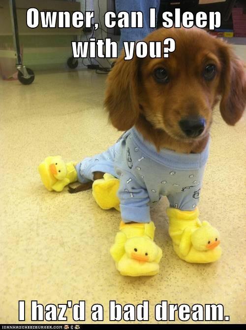 puppy cute slippers pajamas - 7510780416