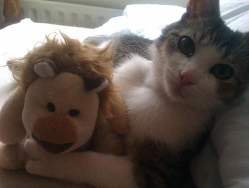 lion kitty stuffed toy - 7511166976