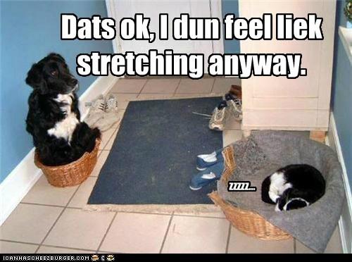cat bed sleep funny - 7512129024