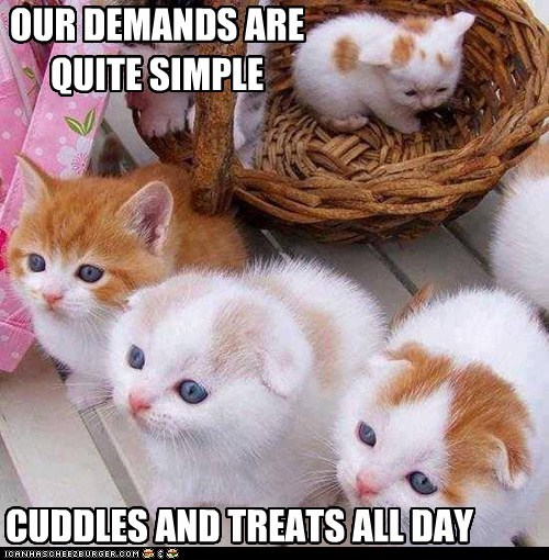 cuddles-demands kitties funny - 7514003712