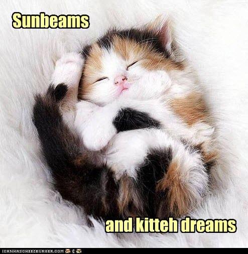 kitten cute sunny happiness - 7514094592
