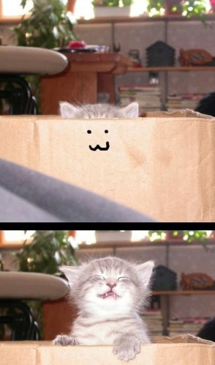 box,cute,surprise,kitty