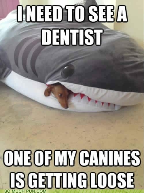 canines dentist dachshund puns shark funny - 7514492928