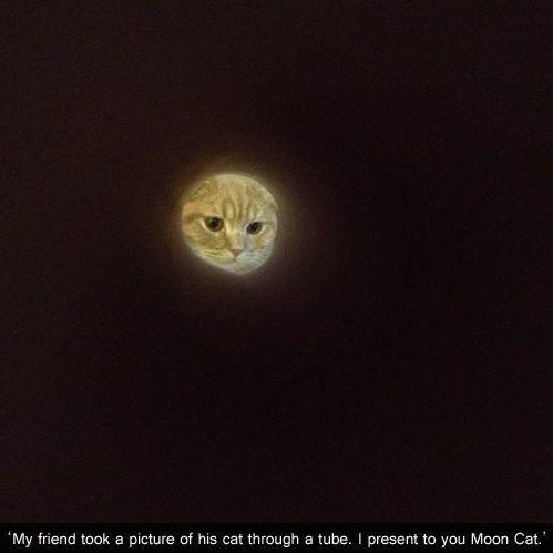 cat,moon,tube,funny