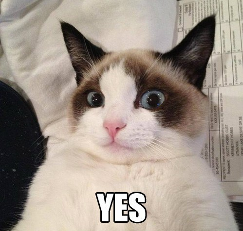 Grumpy Cat,reverse,funny