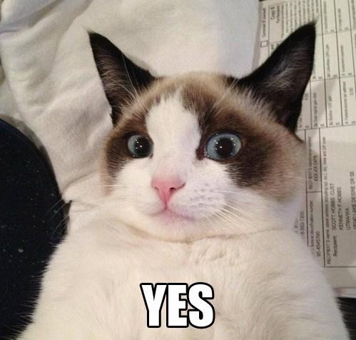 Grumpy Cat reverse funny - 7514621184