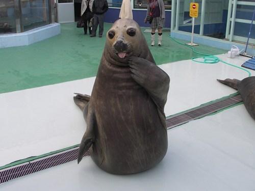 derpy,seal