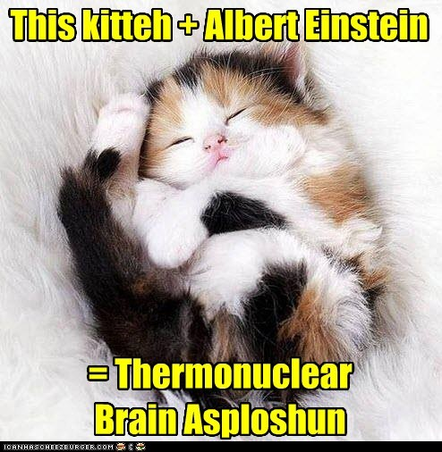 This kitteh + Albert Einstein = Thermonuclear Brain Asploshun