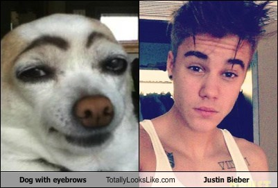 dogs Music justin bieber - 7515380736