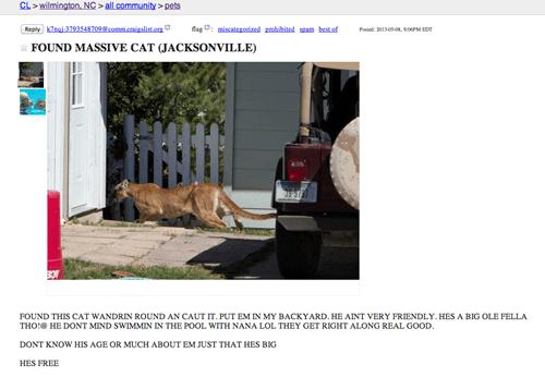craigslist cat funny - 7515480064
