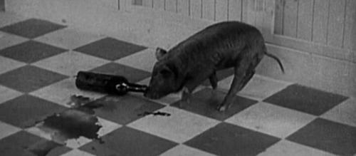 drunk pig wine funny - 7515994624