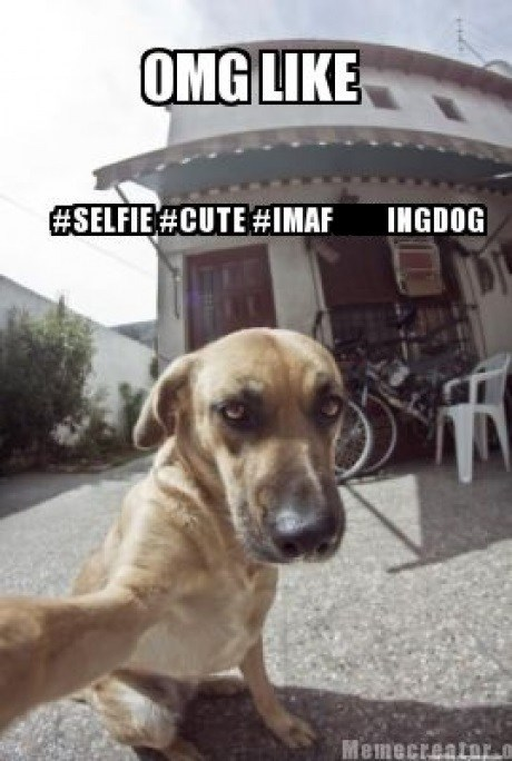 dogs selfie funny - 7516014080