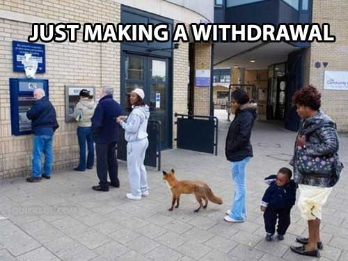 withdrawal fox bank account funny