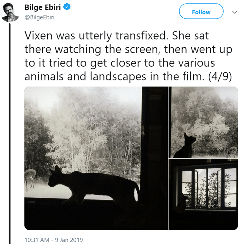 Tweets of cat watching movies by Abbas Kiarostami