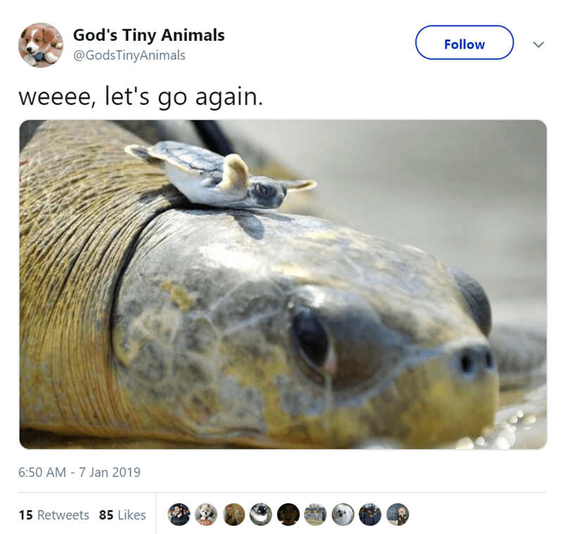 twitter tweets of cute and small animals that are adorable because of their tiny size