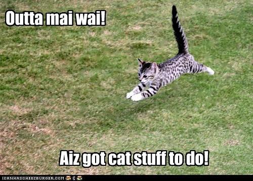 cat stuff funny - 7518044928