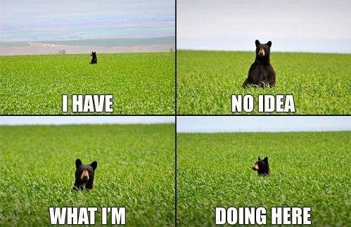 i have no idea,bear,funny,field