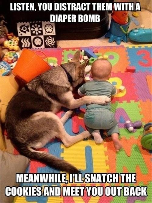 Babies dogs conspiracies cahoots funny - 7518337280