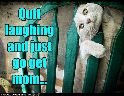 Quit laughing and just go get mom...