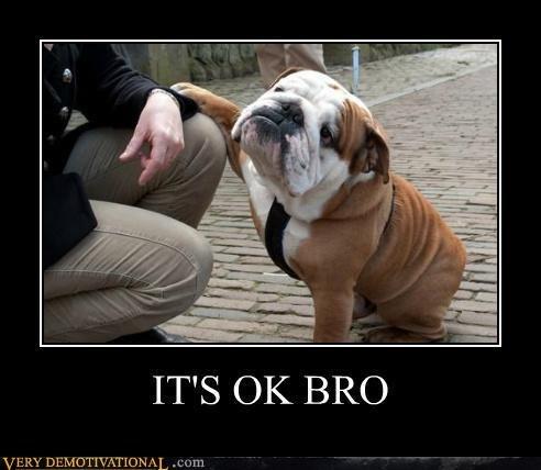 bro bulldog cute funny - 7518817280