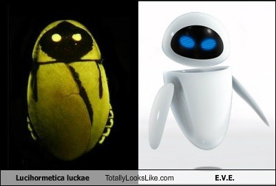 bugs,e-v-e,wall.e,totally looks like,funny