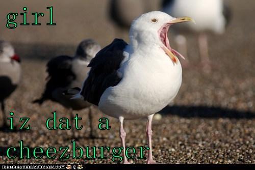 Cheezburger Image 7518925056