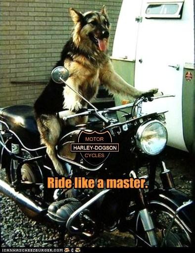 harley davidson,motorcycle,funny