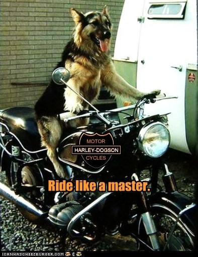 harley davidson motorcycle funny - 7518980864