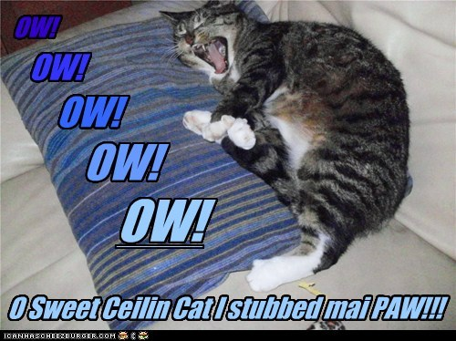 ouch stubbed toe ceiling cat funny - 7519054336
