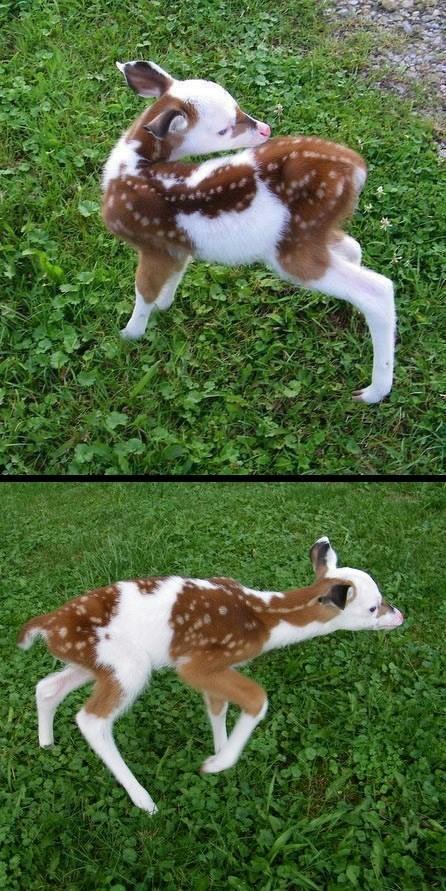 deer fawn - 7519121152