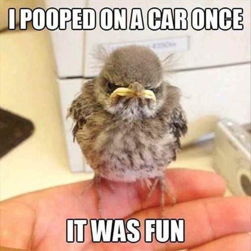 poop grumpy bird funny - 7519372288