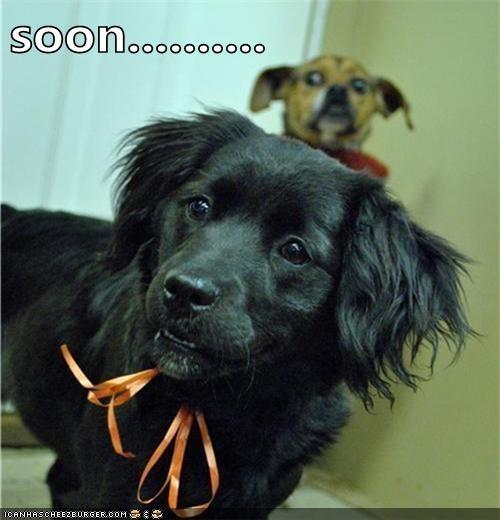 dog eat dog SOON funny - 7519671808